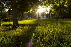 Sonnenaufgang im grünen Garten Stockbild