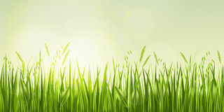 Sonnenaufgang im Gras Lizenzfreies Stockbild