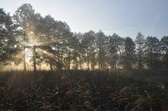 Sonnenaufgang im Land Lizenzfreies Stockbild