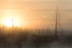 Sonnenaufgang im rauchigen Wald Stockfotografie