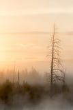 Sonnenaufgang im rauchigen Waldporträt Stockfoto
