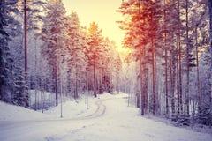 Sonnenaufgang im schneebedeckten Wald Stockfoto