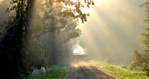 Sonnenaufgang im Wald stockfotos