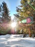 Sonnenaufgang im Wald Stockfoto