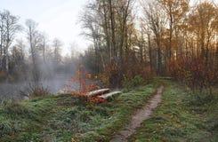 Sonnenaufgang im Wald durch den Nebel Lizenzfreies Stockfoto