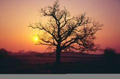 Sonnenaufgang im Winter Lizenzfreie Stockfotografie