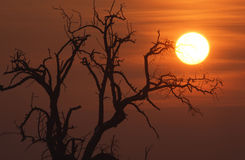 Sonnenaufgang im Winter Stockfoto