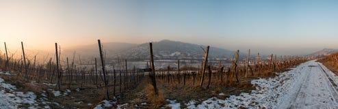 Sonnenaufgang im Winter in einem Weinberg mit Reben Lizenzfreie Stockbilder