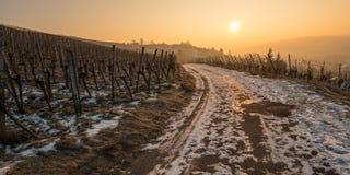 Sonnenaufgang im Winter in einem Weinberg mit Schnee Stockbild