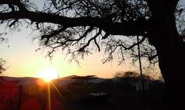 Sonnenaufgang in Lebombo-Bergen und im schönen Dornenbaum Stockbild