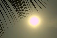 Sonnenaufgang-Licht mit Kokosnussblättern Lizenzfreie Stockfotos