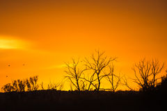 Sonnenaufgang mit Bäumen auf Skylinen Stockbilder
