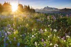 Sonnenaufgang mit Blumen Stockbild