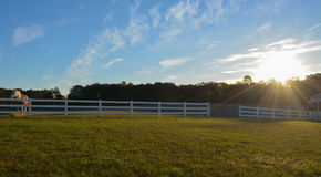 Sonnenaufgang mit den Pferden Stockbilder