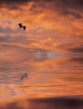 Sonnenaufgang mit einem Vogel Lizenzfreie Stockfotos