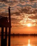 Sonnenaufgang mit einer Seemöwe Stockfotos