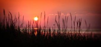 Sonnenaufgang mit Gras und Vogel Stockfoto