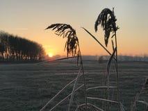 Sonnenaufgang mit Schilf Lizenzfreie Stockfotos