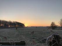 Sonnenaufgang mit Schilf Lizenzfreie Stockfotografie