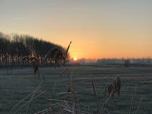 Sonnenaufgang mit Schilf Stockbilder