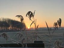 Sonnenaufgang mit Schilf Lizenzfreies Stockfoto