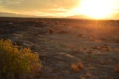 Sonnenaufgang Mojavewüste Nevada-Stadt von Pahrump Stockfoto