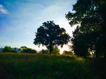 Sonnenaufgang morgens über einer grünen Rasenfläche Sun strahlt crossi aus stockbild