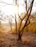 Sonnenaufgang am Nationalpark Ranthambhore in Indien lizenzfreies stockbild