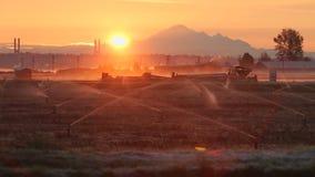 Sonnenaufgang-Nebel, Richmond Cranberry Field stock footage