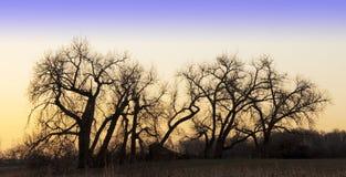 Sonnenaufgang-Schattenbilder der bloßen Bäume Stockbild