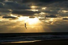 Sonnenaufgang am Strand Stockbilder