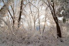 Sonnenaufgang-Szene des verschneiten Winters Lizenzfreies Stockbild