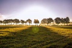 Sonnenaufgang Treeline Stockfotos