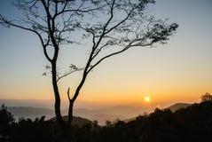 Sonnenaufgang und einsamer Baum Stockbild