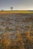 Sonnenaufgang und Frost in der Feldlandschaft Lizenzfreie Stockfotos