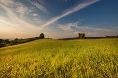 Sonnenaufgang und grüne Wiese Stockbild