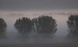 Sonnenaufgang und Nebel Stockfoto