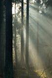 Sonnenaufgang und Wald Stockfotografie