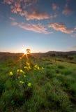 Sonnenaufgang-Zubringer Lizenzfreies Stockbild