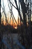 Sonnenaufgang zwischen den Niederlassungen stockbild