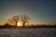 Sonnenaufgang zwischen zwei Bäumen auf Frosty Morning Stockbilder