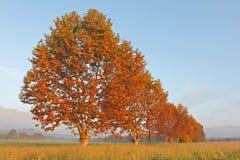 Sonnenaufgangbäume Stockbilder