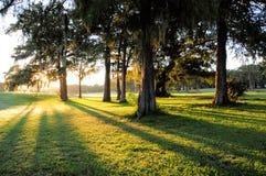 Sonnenaufgangbäume und lange Schatten Stockfotografie
