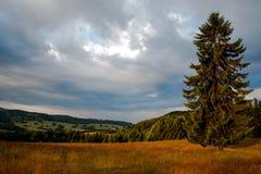 Sonnenaufgangbaum Stockbilder