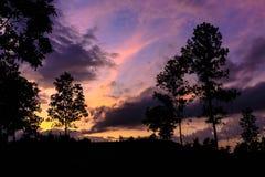 Sonnenaufgangbaum lizenzfreie stockbilder