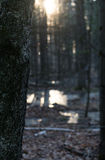 Sonnenaufgangbaum Lizenzfreies Stockfoto