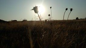 Sonnenaufgangbild Stockfoto