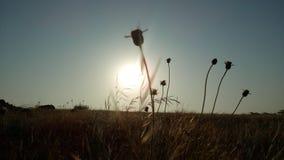 Sonnenaufgangbild Lizenzfreie Stockfotografie