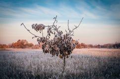 Sonnenaufgangfrostbaum Stockfotografie