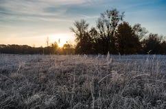 Sonnenaufgangfrostgras Stockfotos
